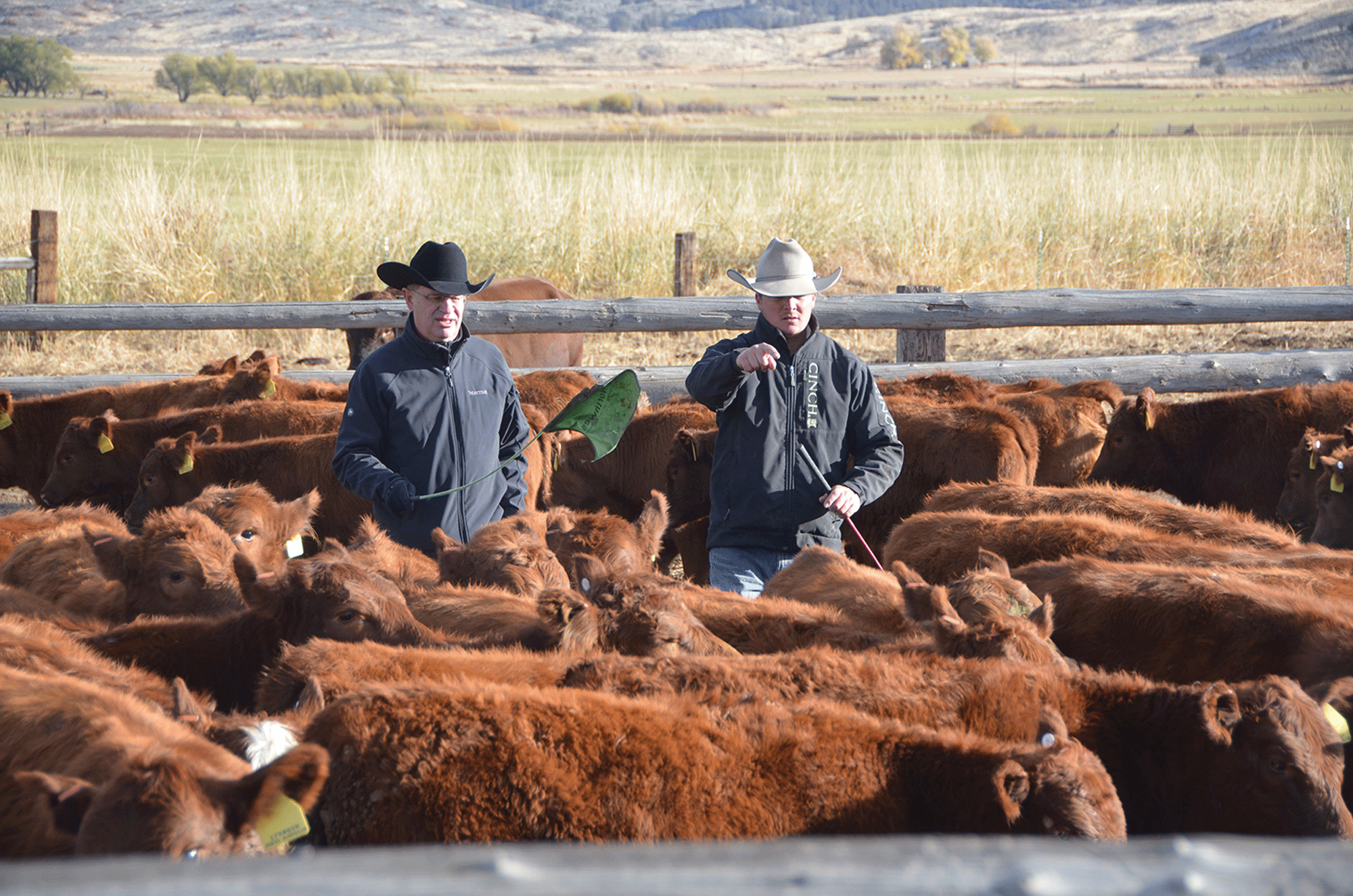 How To Set Up An Equitable Cow Lease Arrangement Beef Magazine
