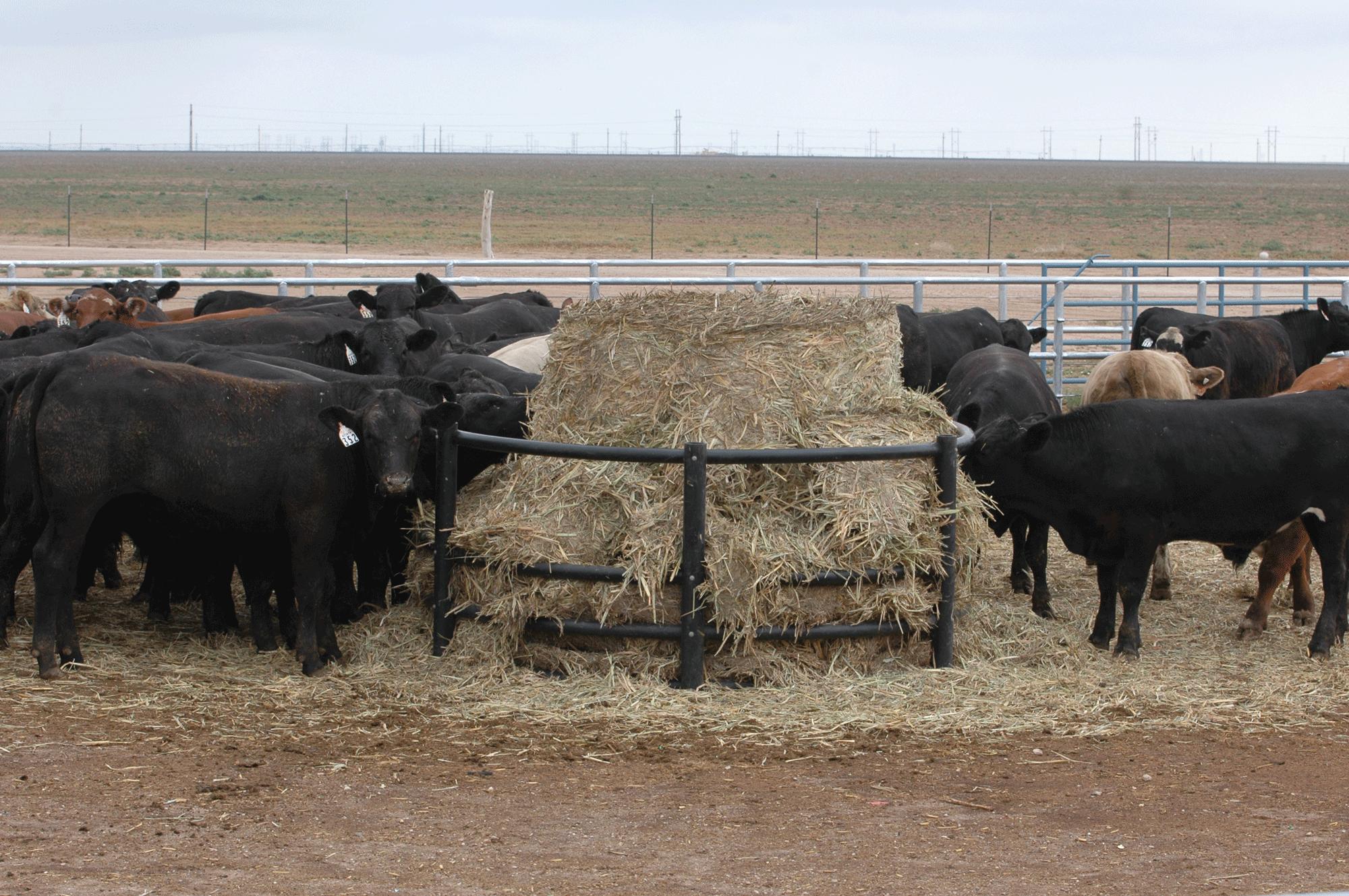 2017 spring born calves production marketing options for ranchers beef magazine. Black Bedroom Furniture Sets. Home Design Ideas