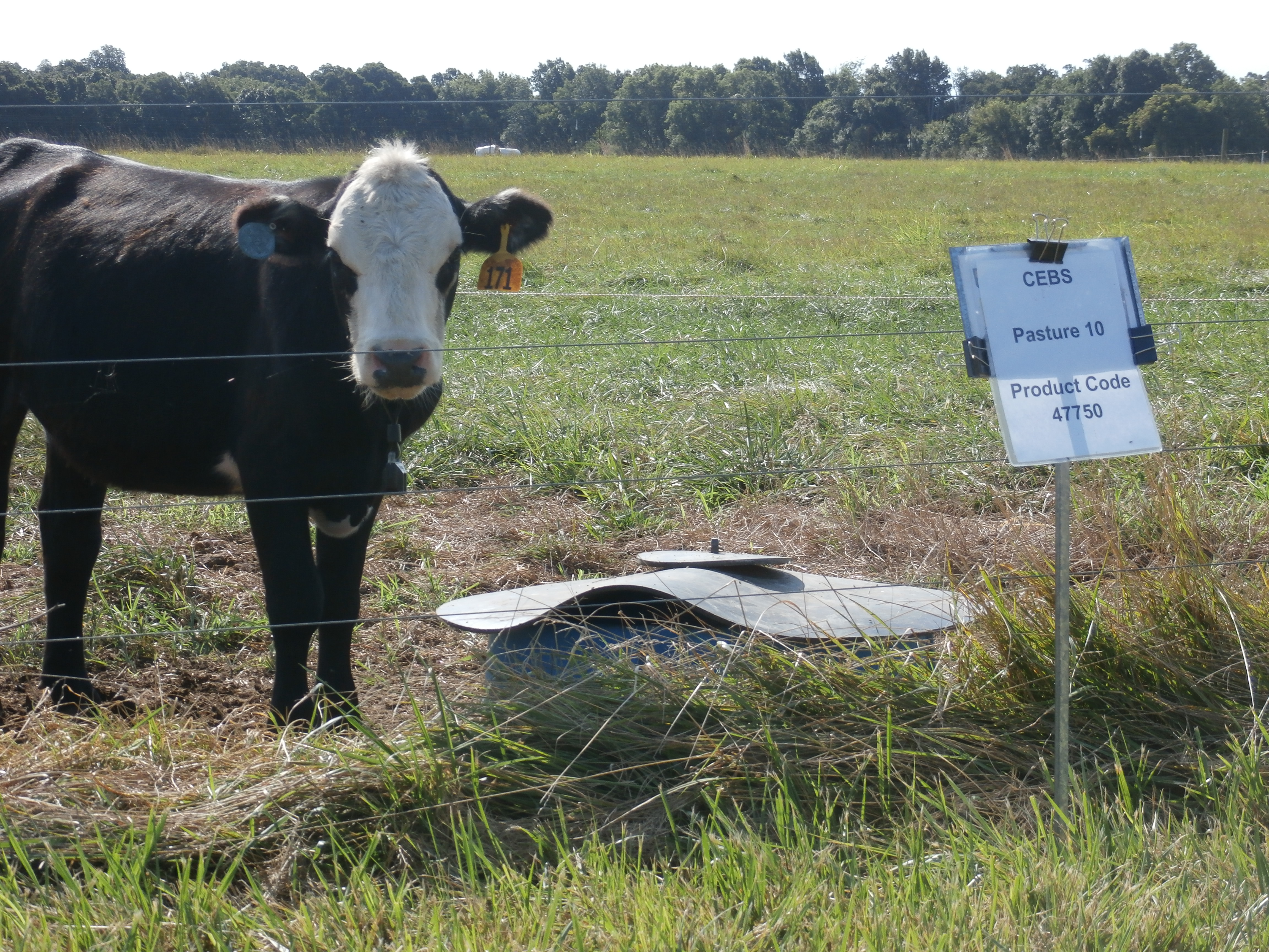 keep mineral supplementation simple if pasture quality is good