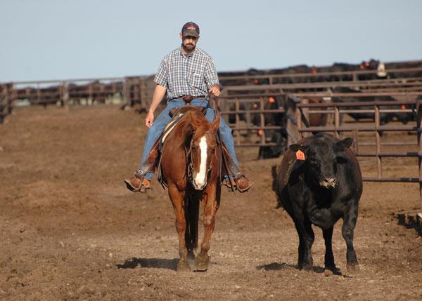 temple grandin shares top cattle handling tips