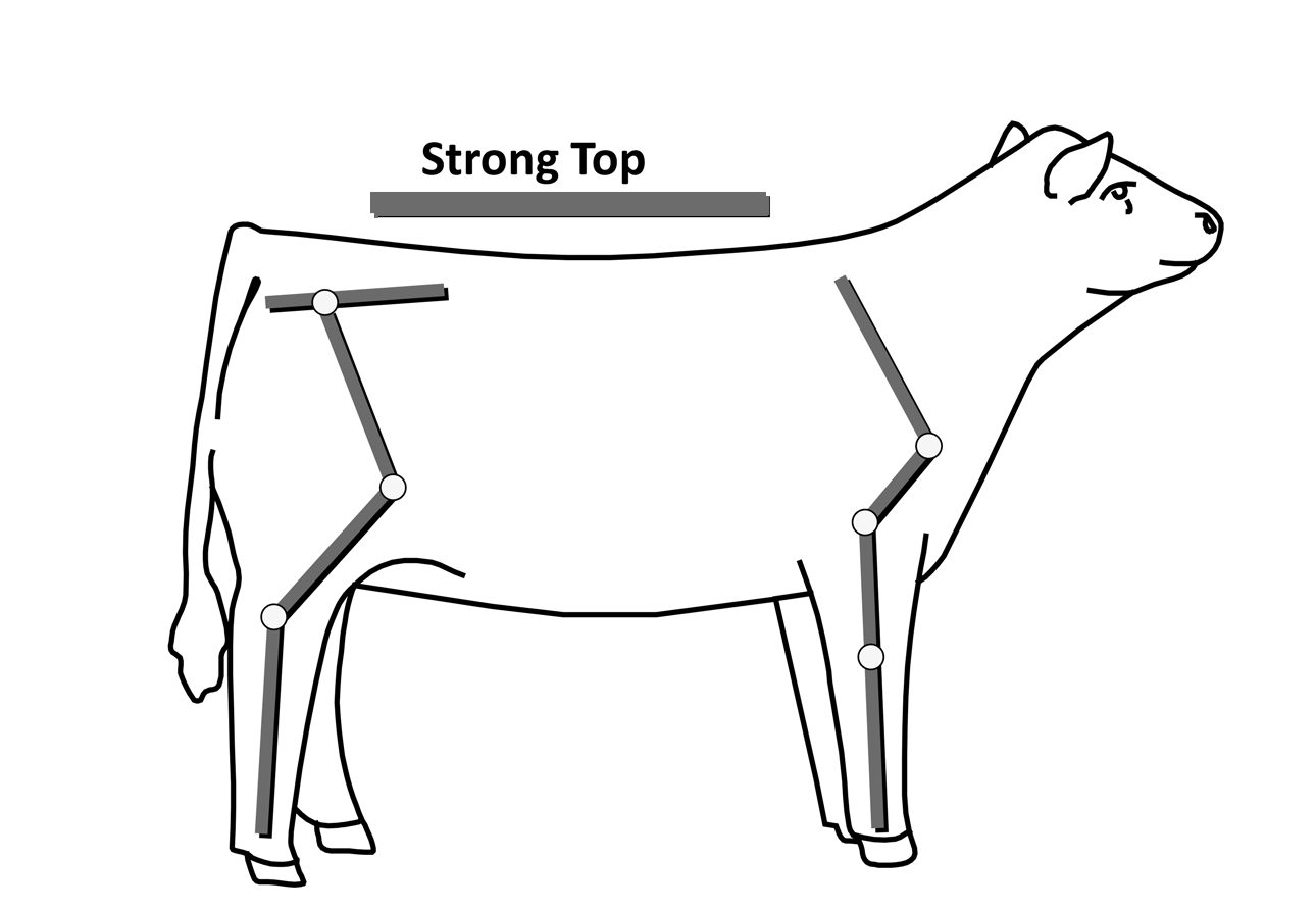 Cow structure