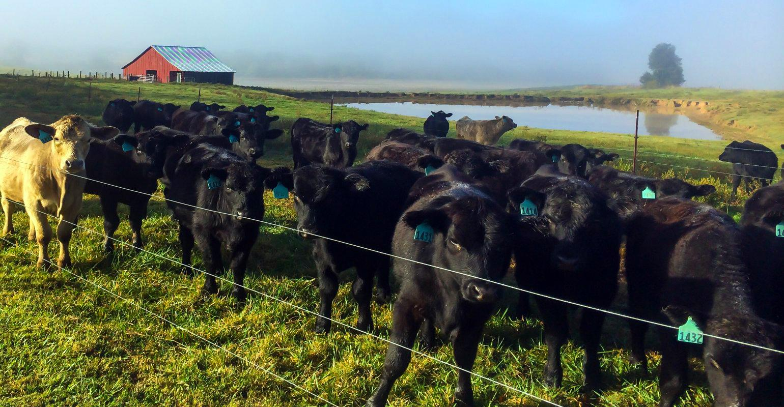 Picture of: Top 10 Tips Every Electric Fence Diyer Should Know Beef Magazine