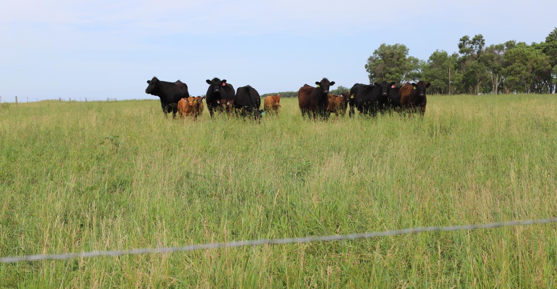 Kanye Buys 14 Million Ranch Plus Feds Say Ag Finances Are Worsening Beef Magazine