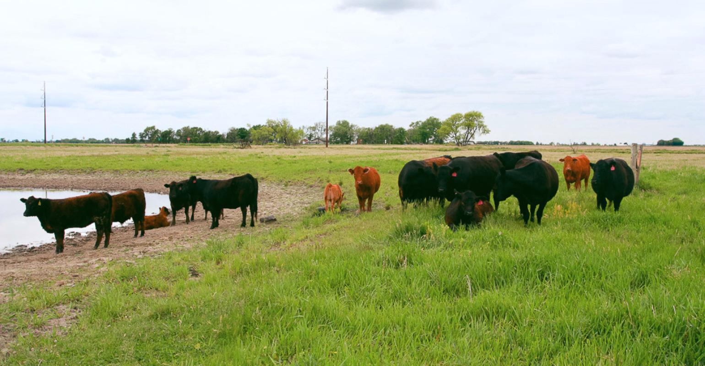 business plan cattle ranch