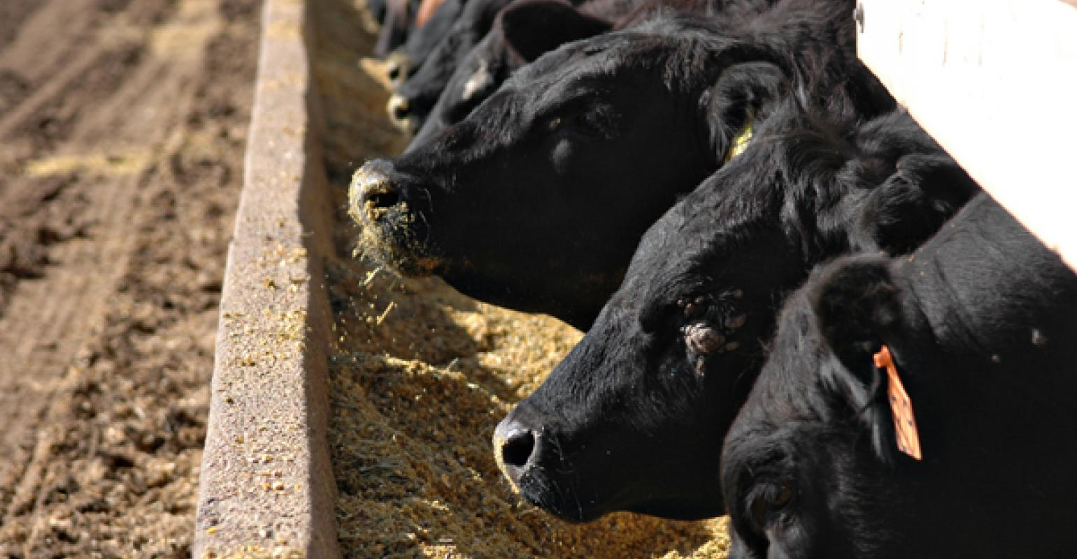 Feed Composition Tables: Discover the nutritional values of