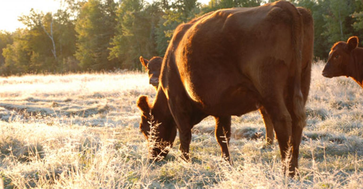 Yes, profitable ranching is possible  Here's how | Beef Magazine