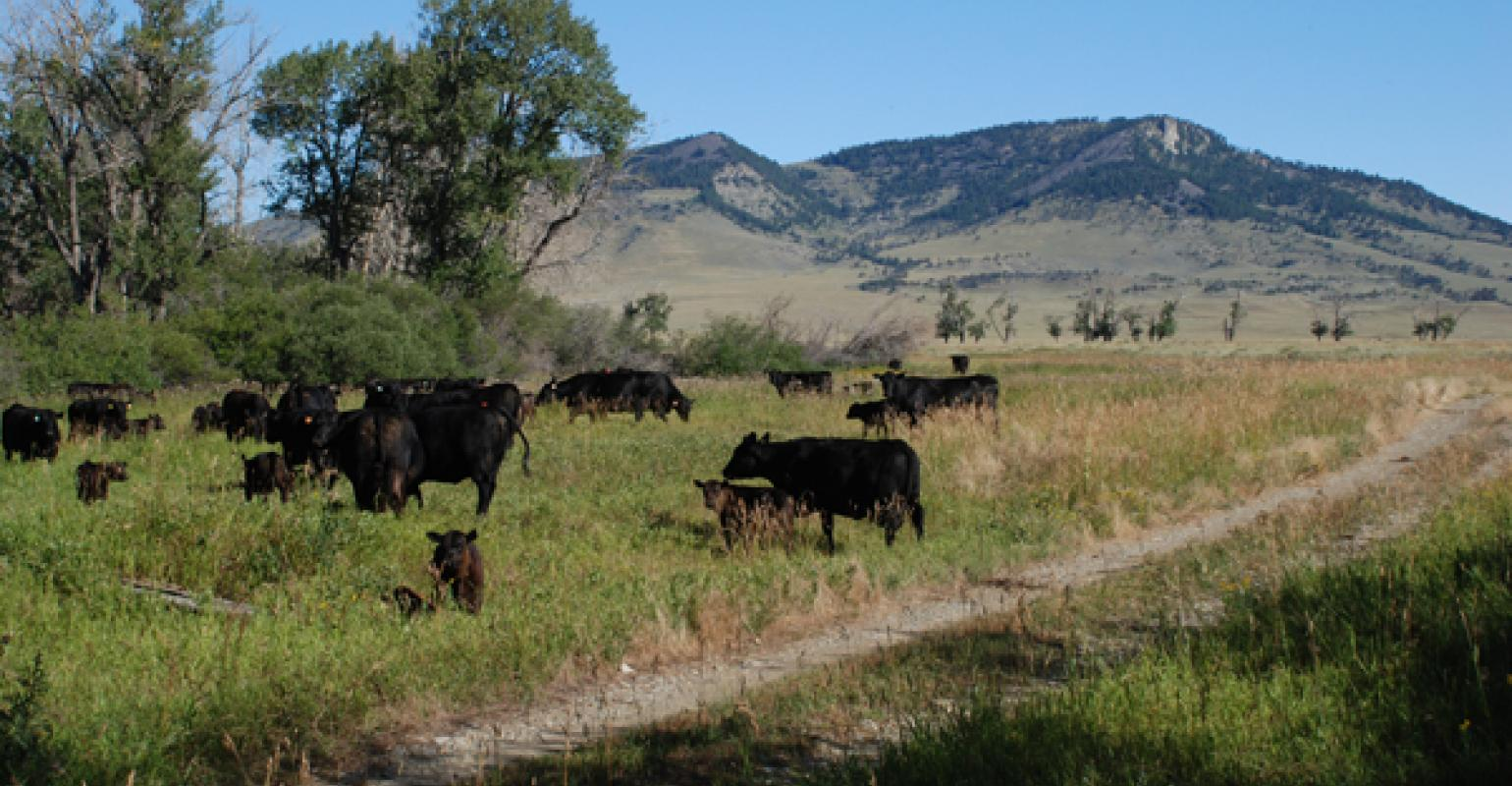 6 Pasture Weed Control Tips For The Fall Beef Magazine