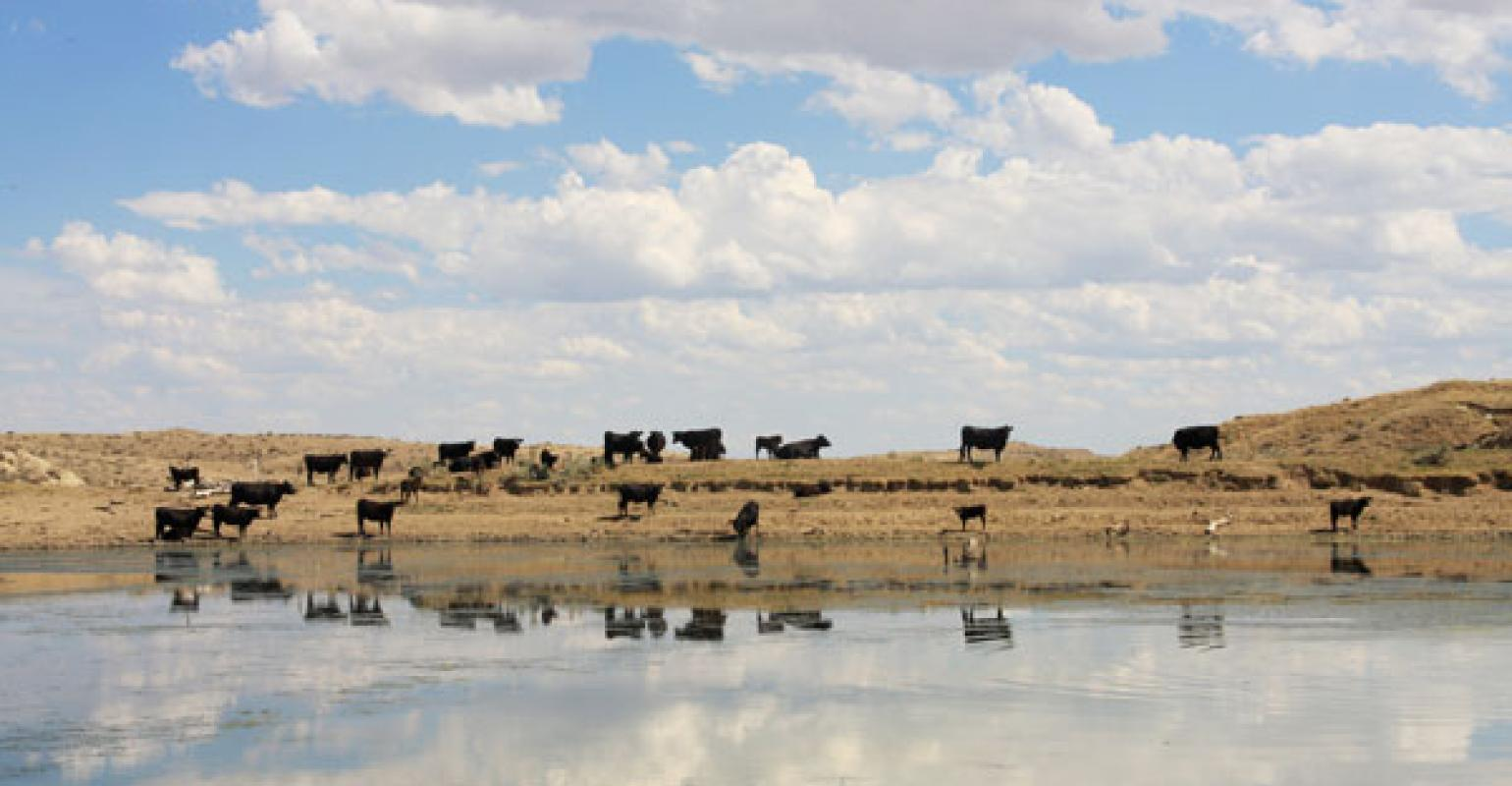 Combating Sulfur Toxicity In Range Cattle | Beef Magazine