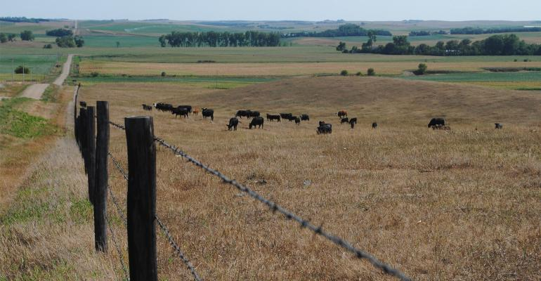 Pasture suffering from drought