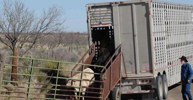 Grass demand for lightweight calves boosts prices