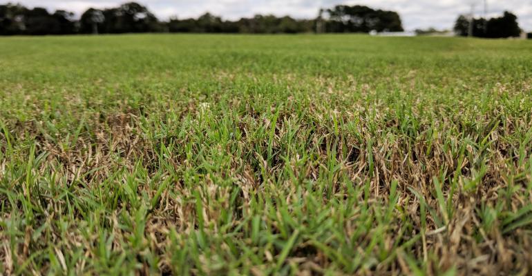 grass mowed too close