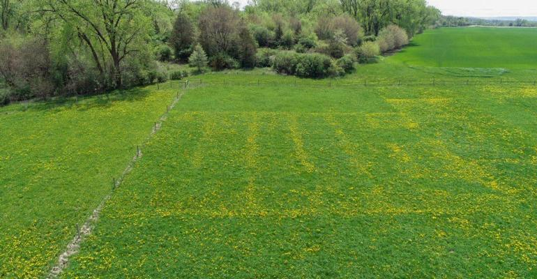 An aerial view of a pasture with dandelions