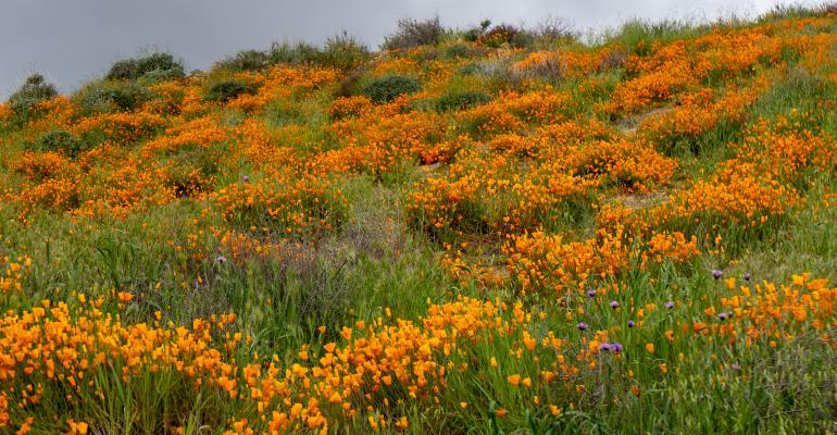 Flowering plants in field
