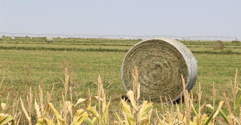 Bales of alfalfa