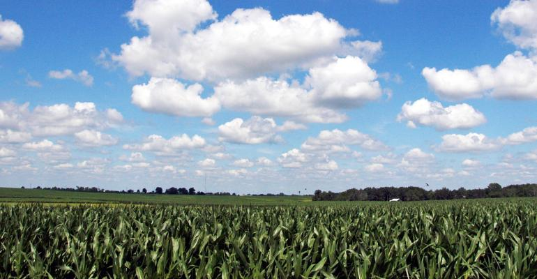 blue sky and puffy white clouds over cornfield