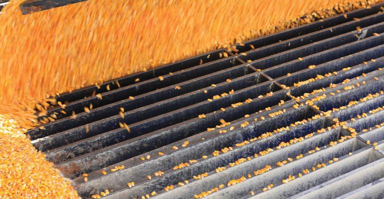 corn pours into grain unloading area