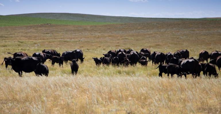 11-05-20 cattle.jpg