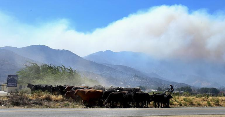 11-09-20 cattle and wildfire.jpg