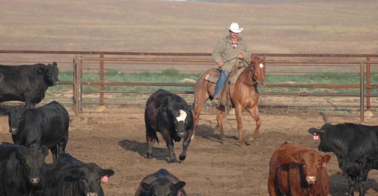 11-19 beef Reeve FY049.JPG
