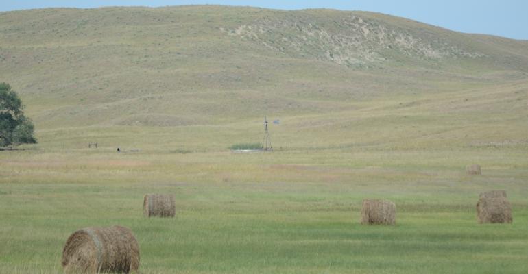 bales of hay in pasture