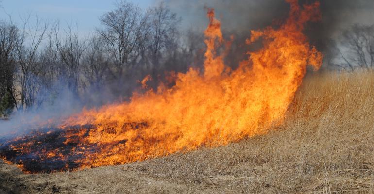 Controlled burn in field