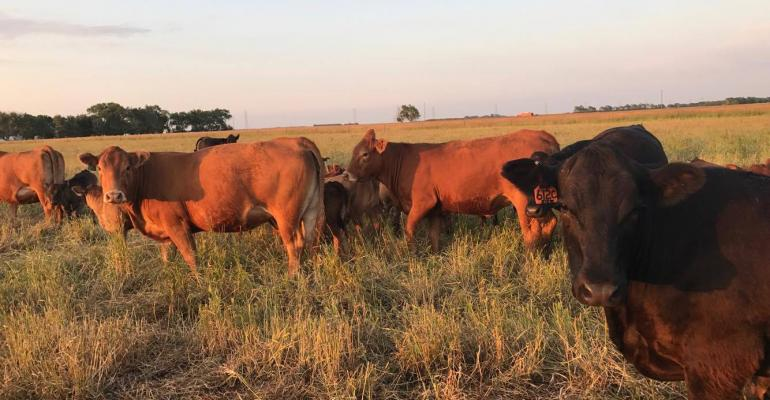 Habits of young ranchers