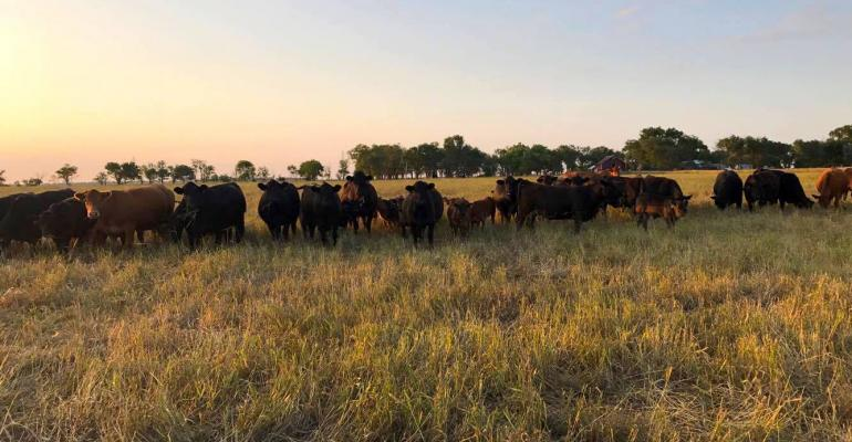 Beef Production Research