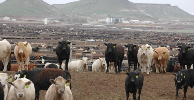 Cattle on Feed report reveals a surprise