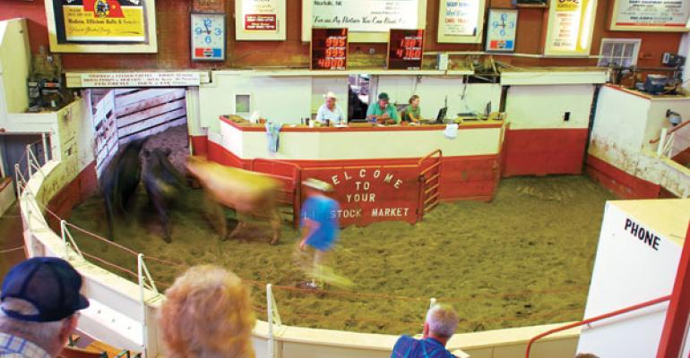 Marketing cattle