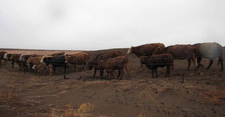 barbed wire fence cattle. Burned Barbed Wire Fence Still Usable, Research Shows Cattle