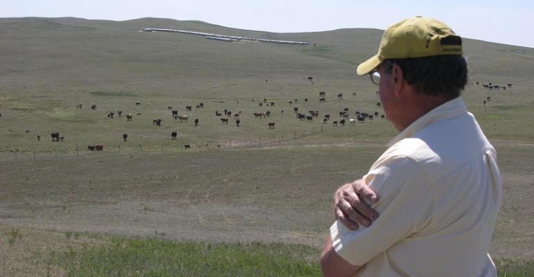 rural beef producer