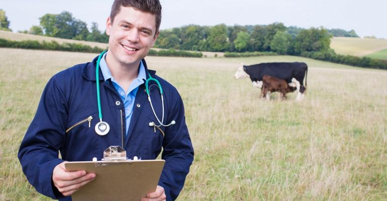 Young vet in pasture