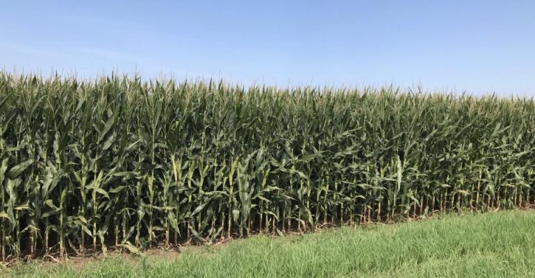 8.06 corn-field.jpeg