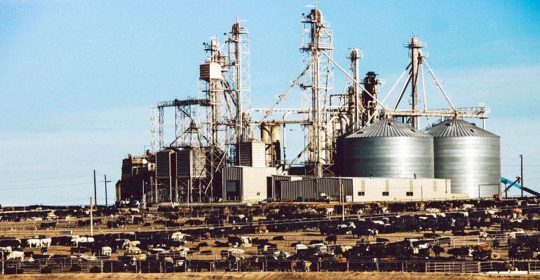 9-27-21 A cattle feedlots.jpg