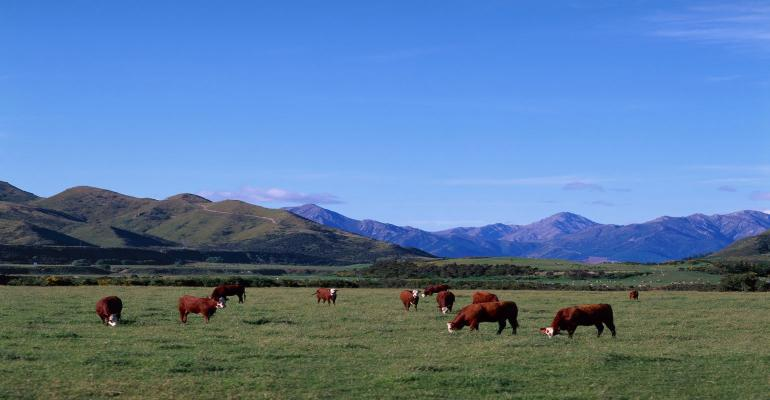 9-28-21 cattle grazing GettyImages-141857042.jpg