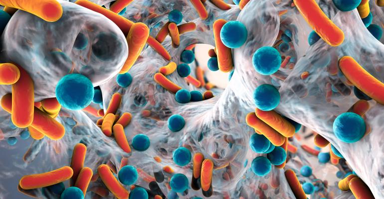 antimicrobial resistant bacteria