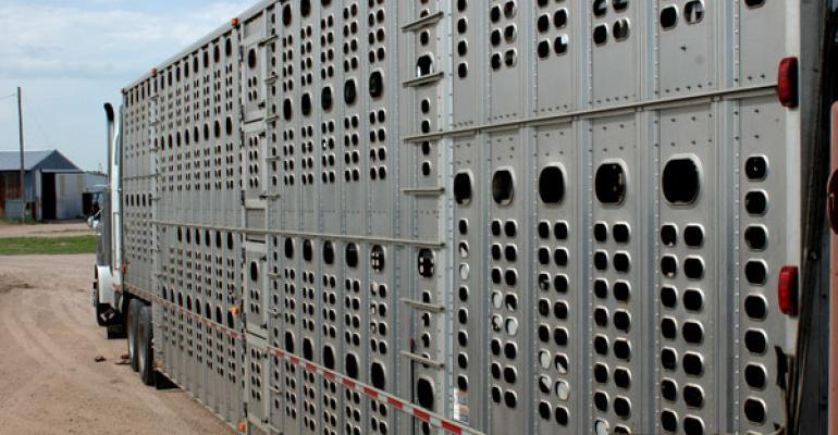 Marketing beef cattle after Tyson fire