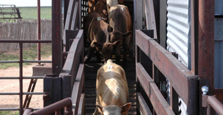 Weaned cattle