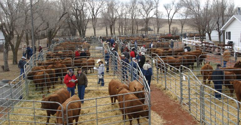 Bull sales for 2016