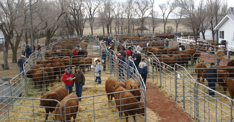 Bull sales for 2016