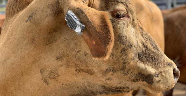 Ceres Tag ear tag