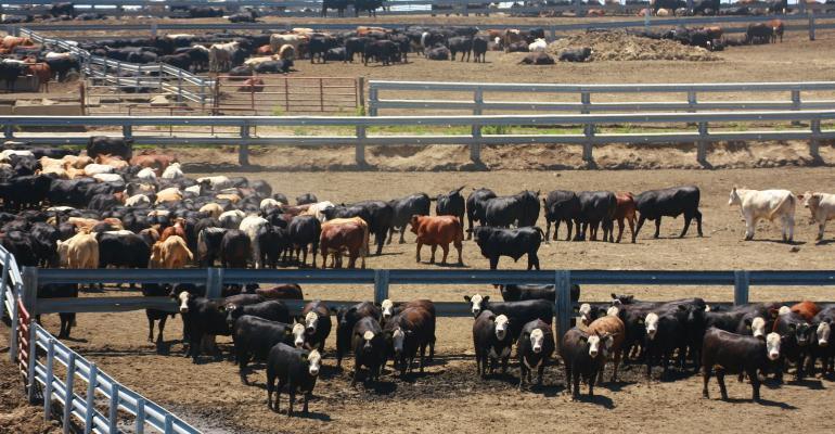 Cattle feedlot GettyImages-538600808.jpg