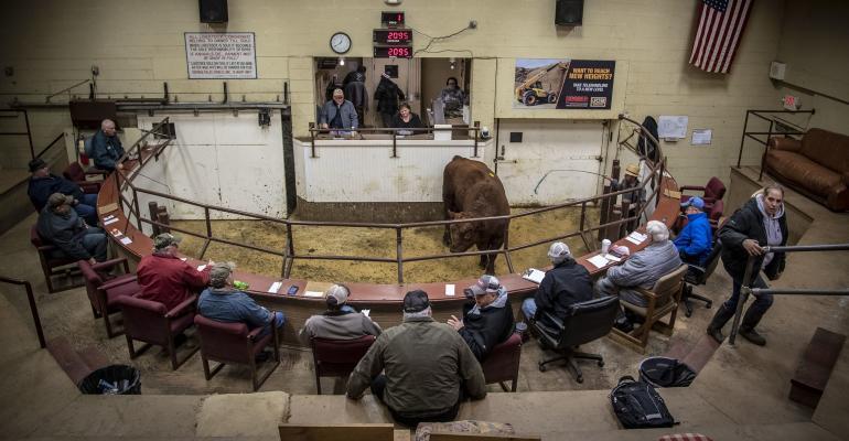 Cattle salebarn USDA.jpg