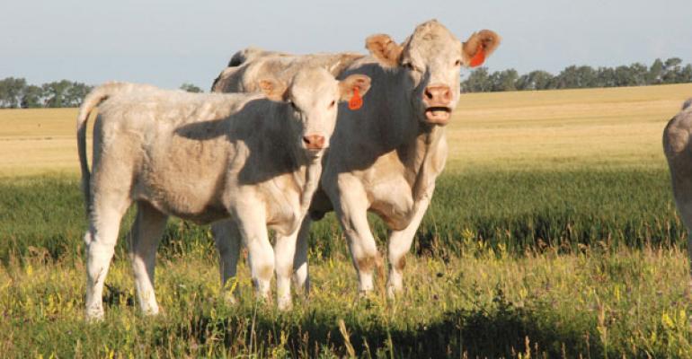 Cow calf profitability