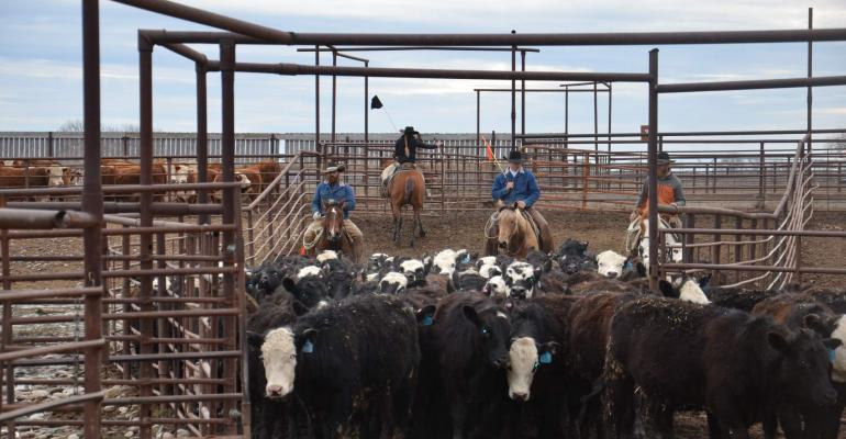 Value-added cattle