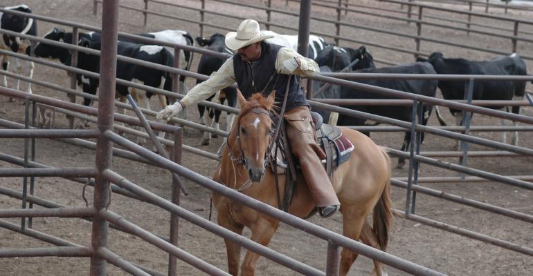 Feedyard cowboy