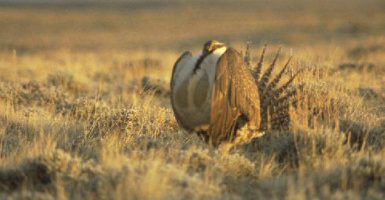 The US House of Representatives tacked on a provision to the 2016 National Defense Authorization Act that includes language to block the listings of the greater sage grouse and lesser prairie chicken under the Endangered Species Act ESA according to the Oklahoma Farm ReportquotIf sage grouse are designated for protection under the ESA many ranchers may no longer be permitted to allow livestock to graze on or near sage grouse habitat habitat which spans across 11 western states and encompasses
