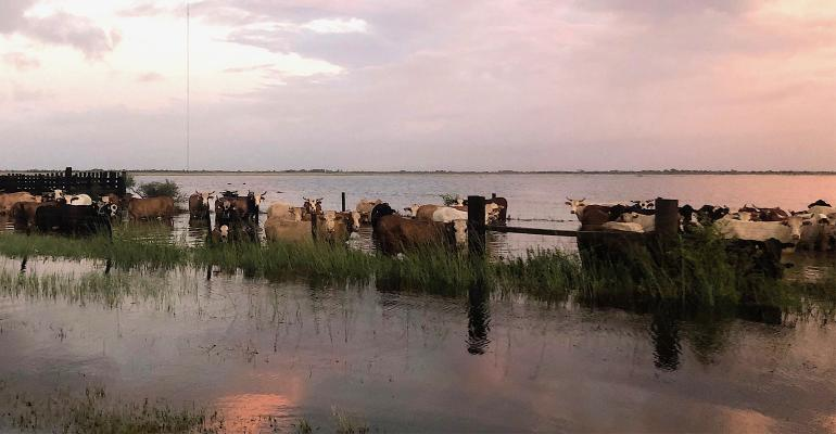 Extension-Imelda-cattle-floods-banner.jpg