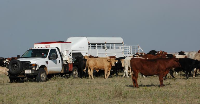 livestock trailer purchase