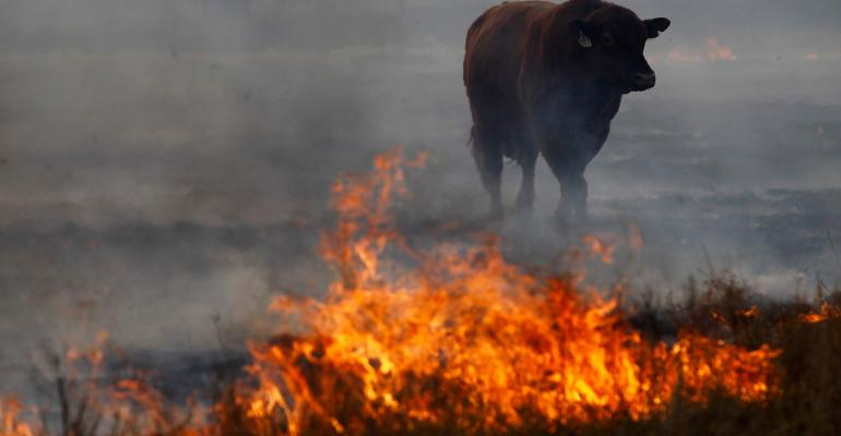 wildfires ravage cattle country